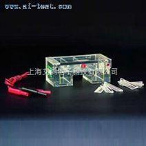 琼脂糖水平电泳仪(槽)(小号)